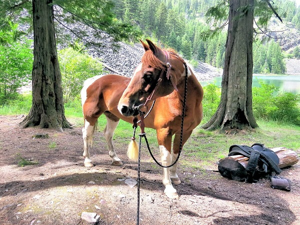 Camp Patriot's horse Apache at the lake on a hike